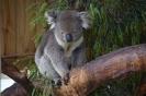 AUS Landscapes Phillip Island07